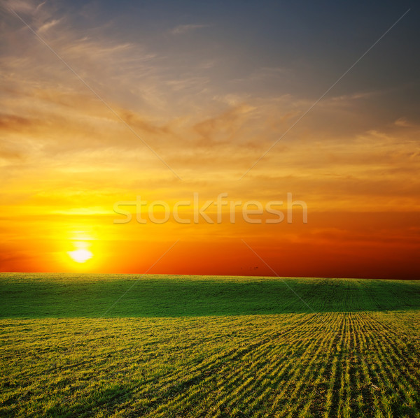 last sunrays over green field Stock photo © mycola