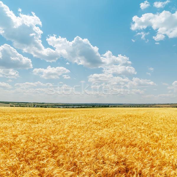 Campo dourado colheita nuvens céu comida Foto stock © mycola