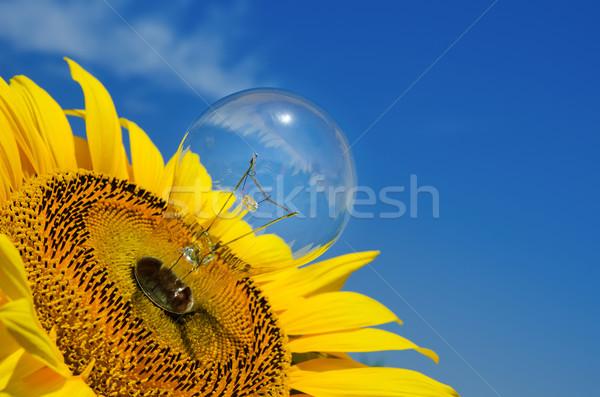 old light bulb and sunflower Stock photo © mycola