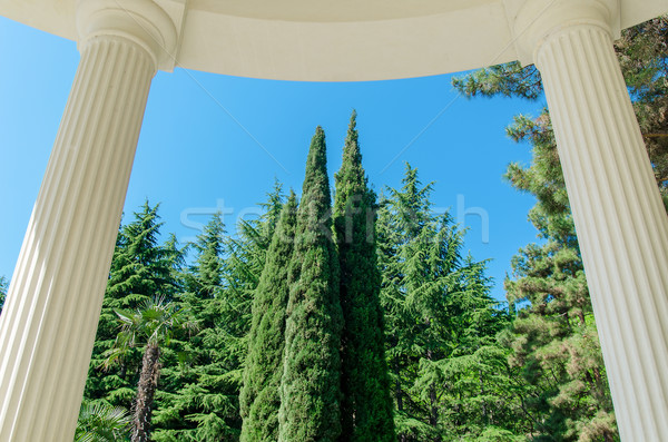Kolom boom witte kolommen groene boom bos Stockfoto © mycola