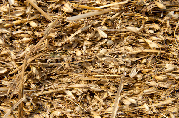 image of pressed straw with husk Stock photo © mycola