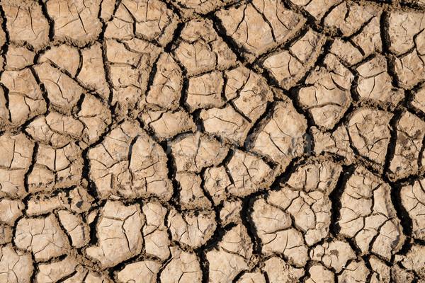 Kırık toprak doku soyut yaz sıcak Stok fotoğraf © mycola