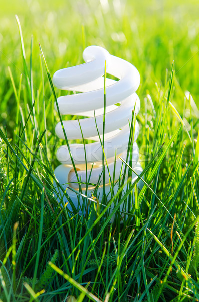 energy-saving lamp in green grass Stock photo © mycola
