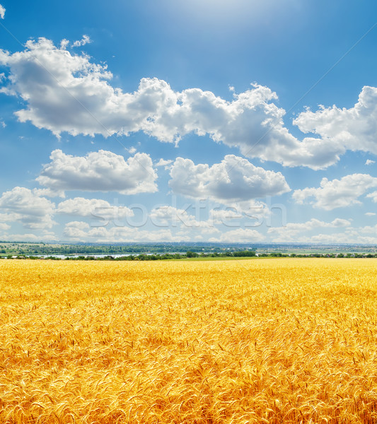clouds in blue sky with clouds over golden harvest Stock photo © mycola