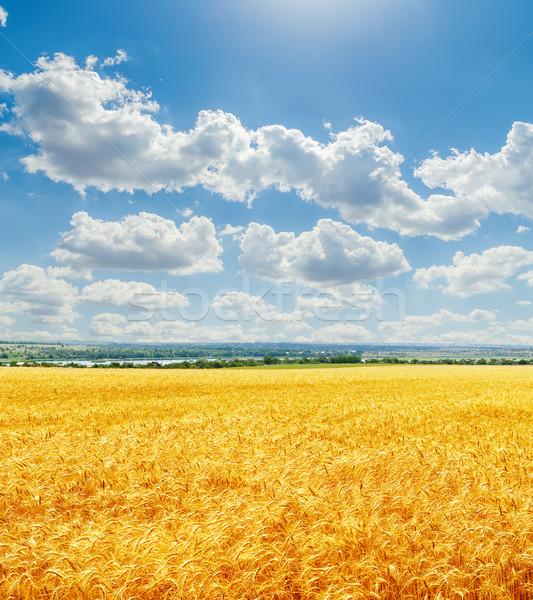 Wolken blauer Himmel golden Ernte Landschaft Hintergrund Stock foto © mycola