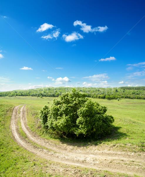 Rural estrada nublado céu árvore grama Foto stock © mycola