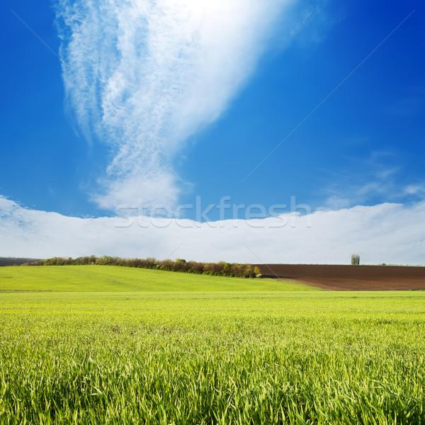 Dziedzinie zielona trawa mętny niebo świetle piękna Zdjęcia stock © mycola