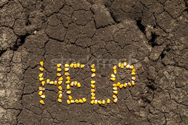 Szó segítség magvak kukorica repedt Föld Stock fotó © mycola