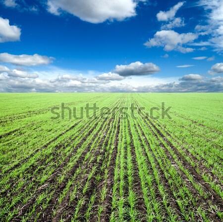 Dziedzinie trawy mętny niebo wiosną gospodarstwa Zdjęcia stock © mycola