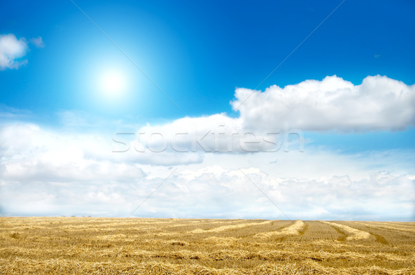 good landscape with sun and clouds Stock photo © mycola