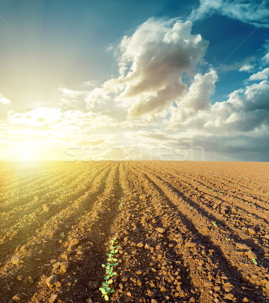 sunset in clouds and plowed field Stock photo © mycola