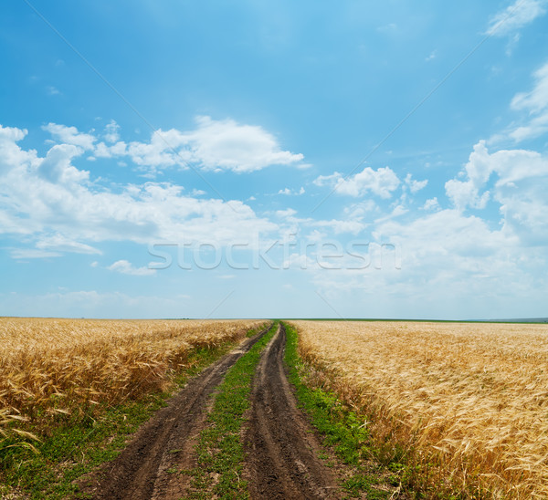 rural road in golden agricultural field under cloudy sky Stock photo © mycola
