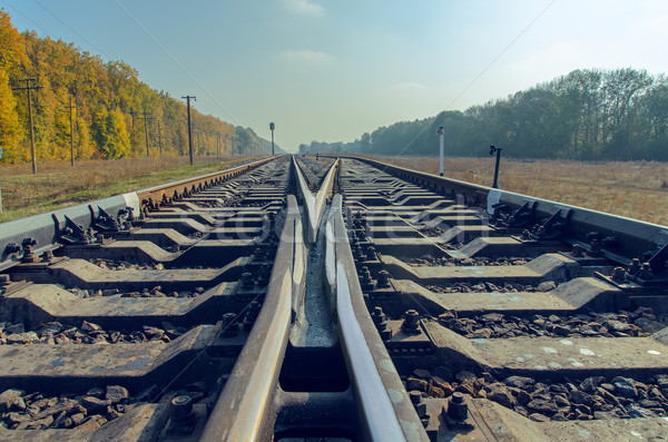 crossing of two railroad to horizon Stock photo © mycola