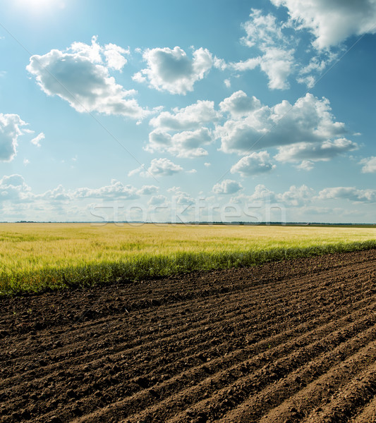 black and green agriculture field and cloudy sky Stock photo © mycola