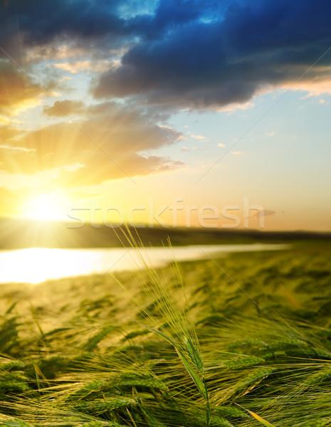 Wygaśnięcia dziedzinie zielone jęczmień niebo świetle Zdjęcia stock © mycola
