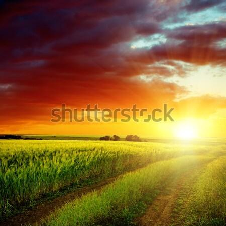 Güzel gün batımı yeşil alan bahar çim Stok fotoğraf © mycola