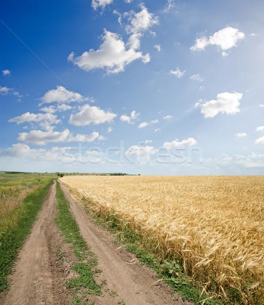 Rural estrada campo trigo céu paisagem Foto stock © mycola