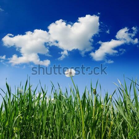 Eski karahindiba yeşil ot alan mavi gökyüzü gökyüzü Stok fotoğraf © mycola