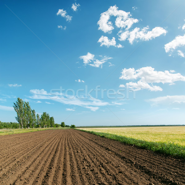 landscape with plowed field under light clouds Stock photo © mycola