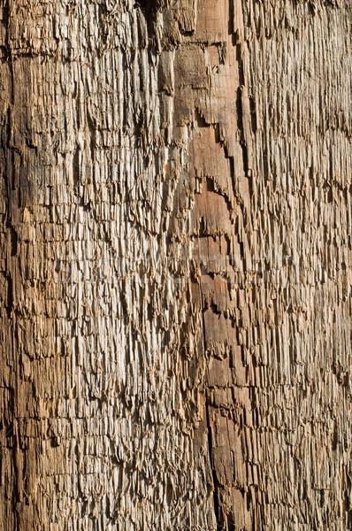 Mintázott régi fa durva absztrakt textúrák retro Stock fotó © mycola