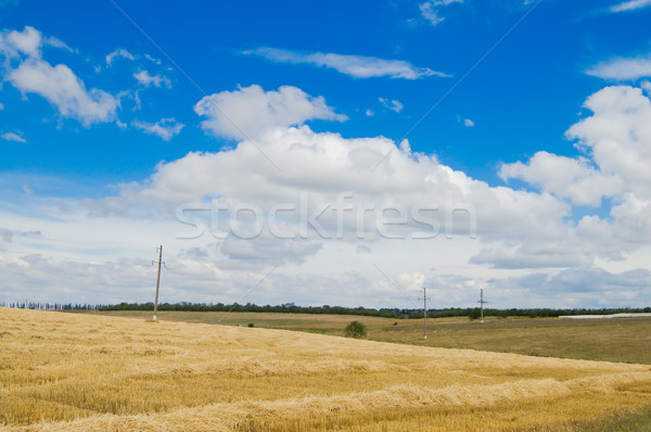 rural view Stock photo © mycola