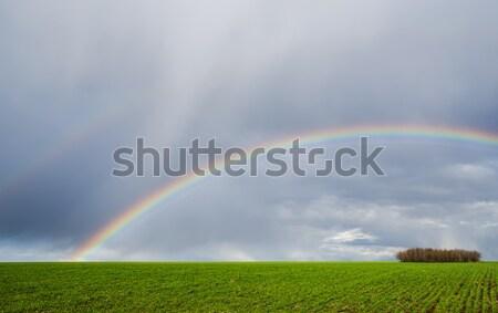 natural rainbow over green field Stock photo © mycola