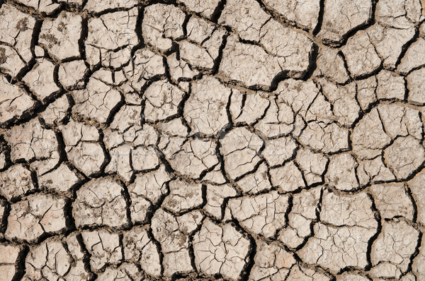 dry earth texture Stock photo © mycola