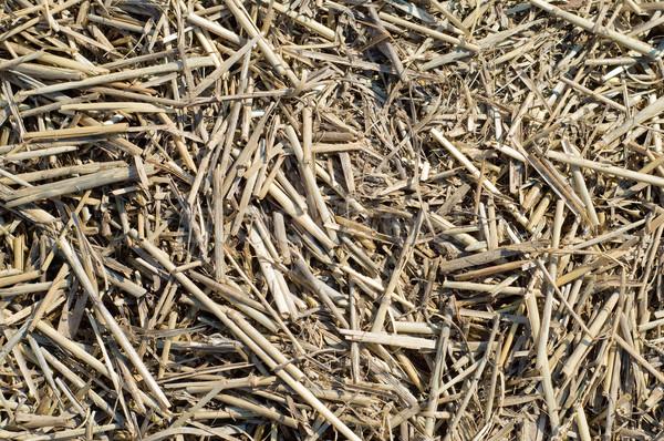 old straw Stock photo © mycola