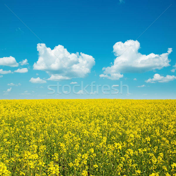 yellow field with rape and clouds in blue sky Stock photo © mycola