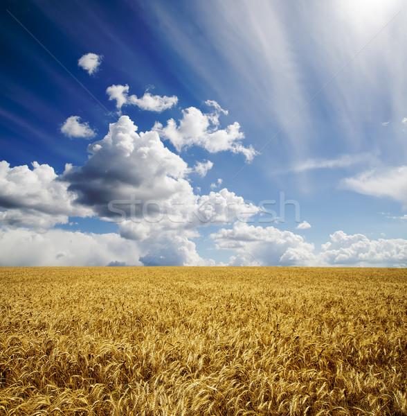 Dziedzinie jęczmień mętny niebo chleba biały Zdjęcia stock © mycola