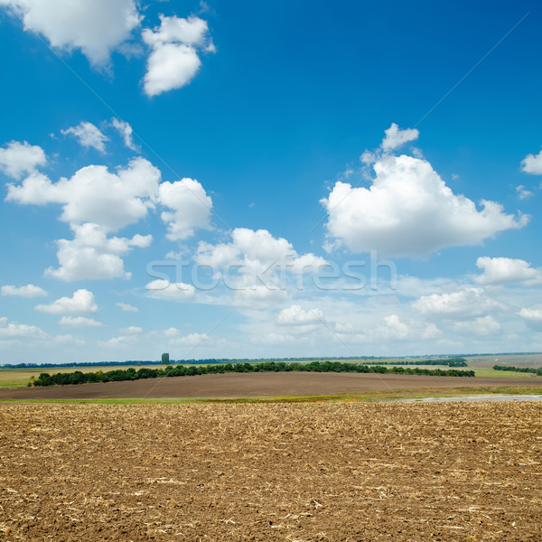 ploughed field and light clouds over it Stock photo © mycola