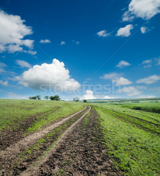 rural road in green grass Stock photo © mycola