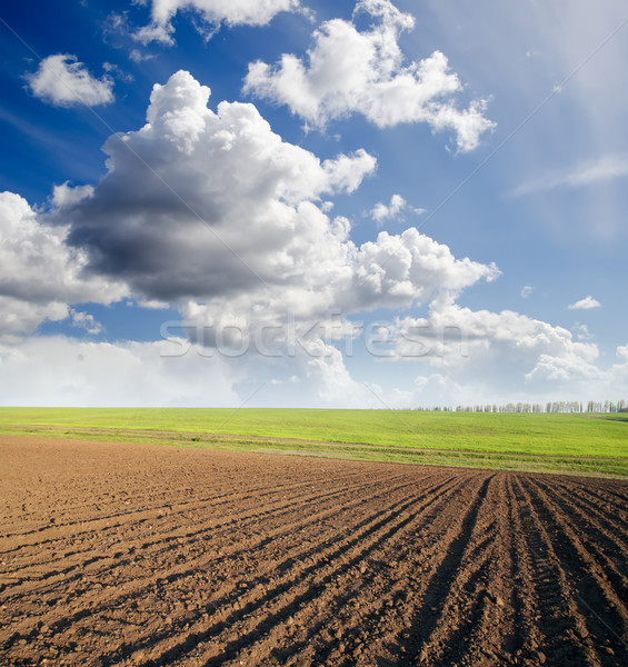 ploughed field Stock photo © mycola