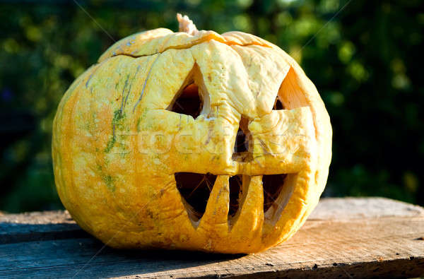 helloween pumpkin in evening Stock photo © mycola