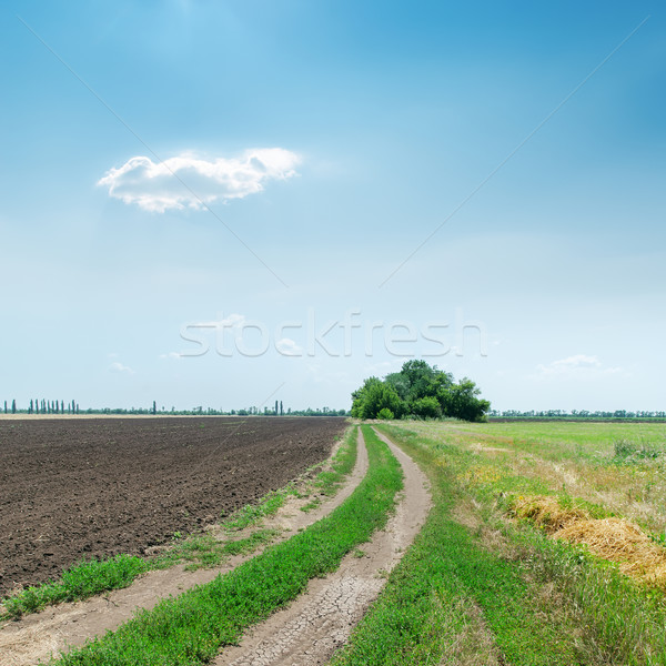 dirty road to horizon in agriculture fields under blue sky Stock photo © mycola