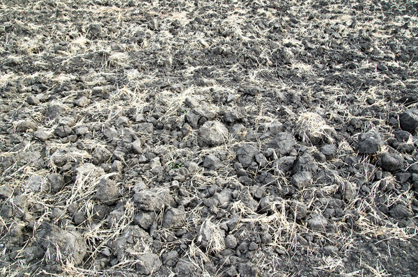 arable earth in autumn after harvesting Stock photo © mycola