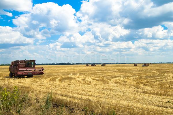 Zdjęcia stock: Pracy · pole · pszenicy · niebo · żywności · słońce