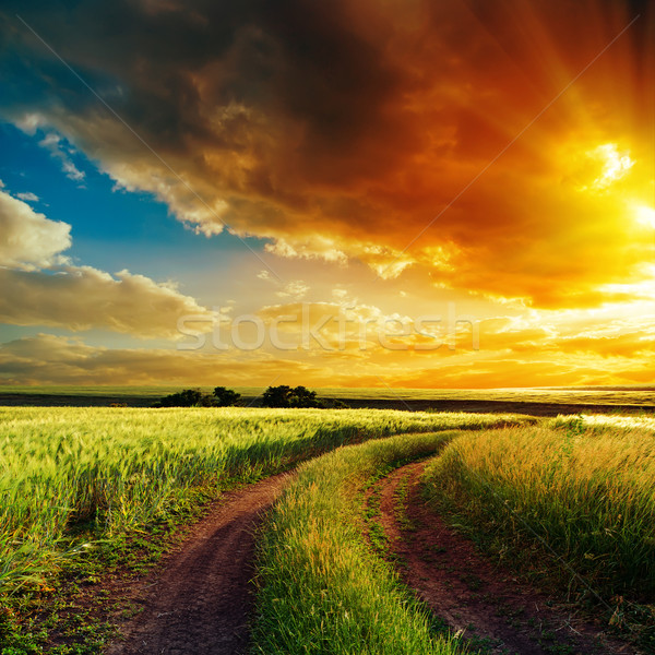 good sunset over winding road in field Stock photo © mycola