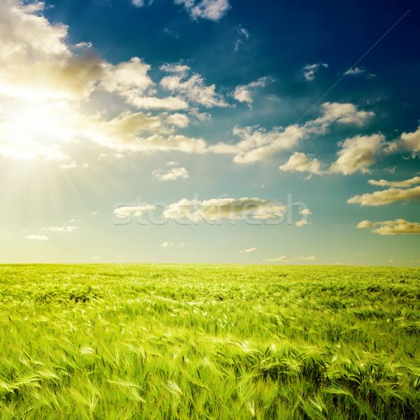 Dramatik gün batımı yeşil alan bahar çim Stok fotoğraf © mycola