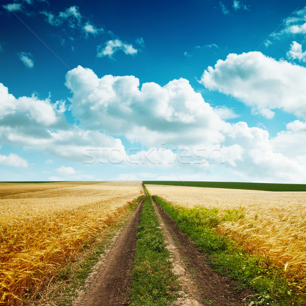 Stock photo: road in yellow field with harvest and cloudy blue sky