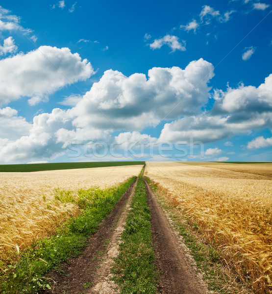 road in golden agricultural field under clouds Stock photo © mycola