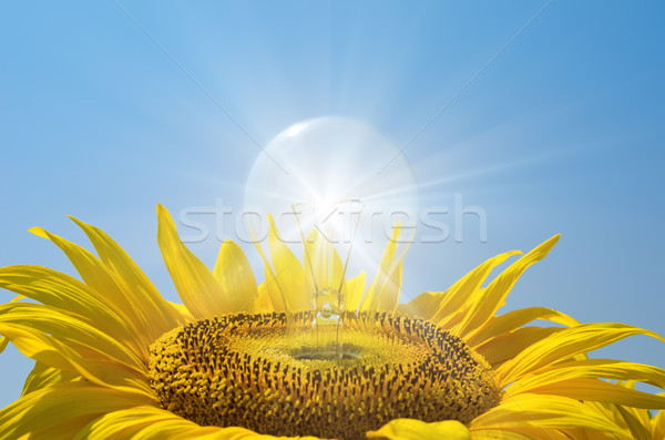 bulb in sunflower with reflections Stock photo © mycola