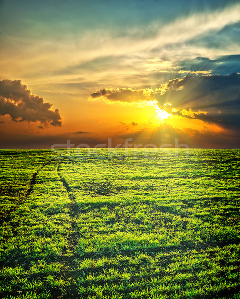 last sunrays over green field with path Stock photo © mycola
