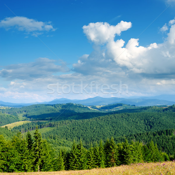 Beautiful green mountain landscape with trees in Carpathians Stock photo © mycola