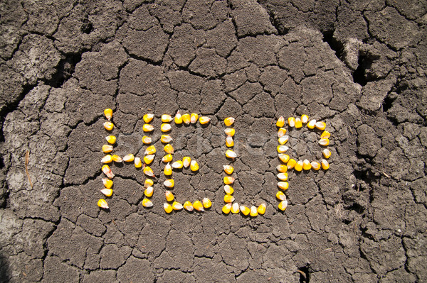 word HELP from grains of corn over cracked earth Stock photo © mycola