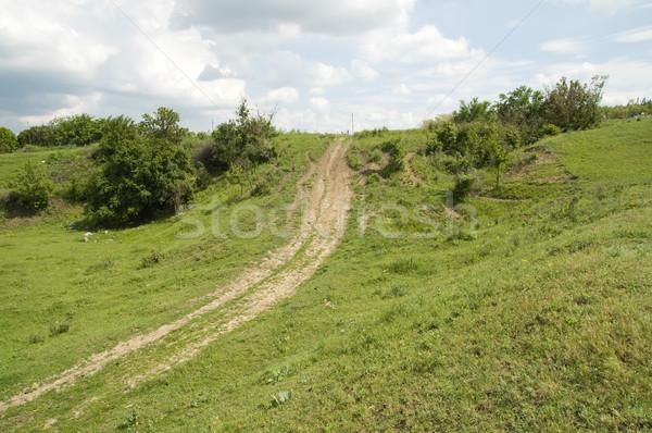 Sposób horyzoncie niebo trawy drogowego lasu Zdjęcia stock © mycola