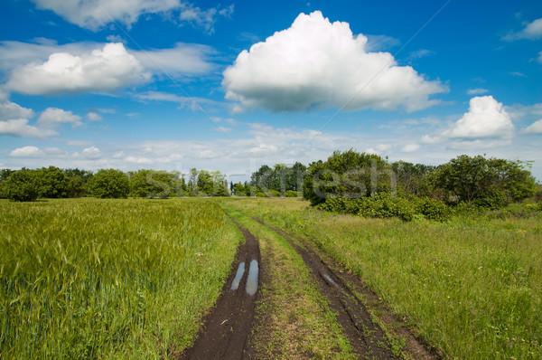 Rural estrada verde campo grama preto Foto stock © mycola
