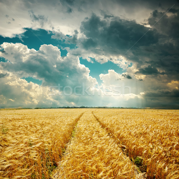 harvest field with track and low clouds over it Stock photo © mycola