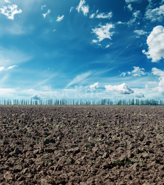 plowed field under dramatic sky Stock photo © mycola