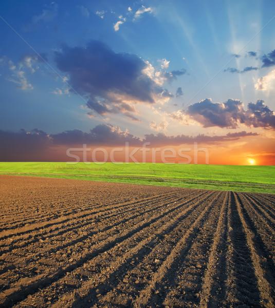 Rolniczy dziedzinie wygaśnięcia czarny trawy charakter Zdjęcia stock © mycola